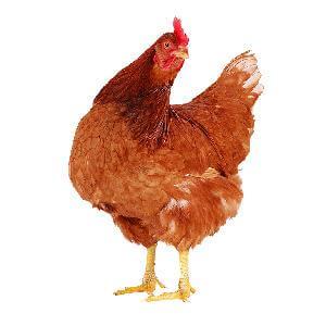 Gerechten-met-kip