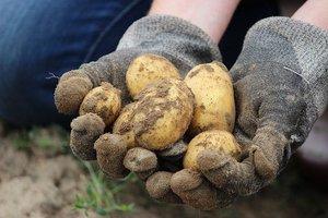 Aardappelkoek